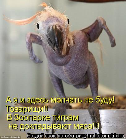 Котоматрица: А я и здесь молчать не буду! Товарищи!! В Зоопарке тиграм  не докладывают мяса!!!