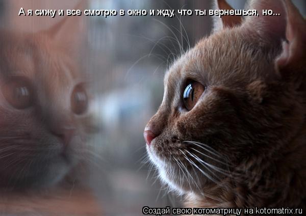 Котоматрица: А я сижу и все смотрю в окно и жду, что ты вернешься, но...