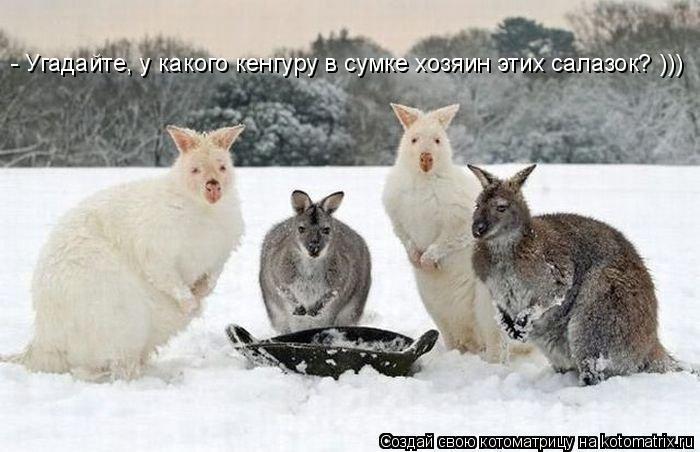 Котоматрица: - Угадайте, у какого кенгуру в сумке хозяин этих салазок? )))