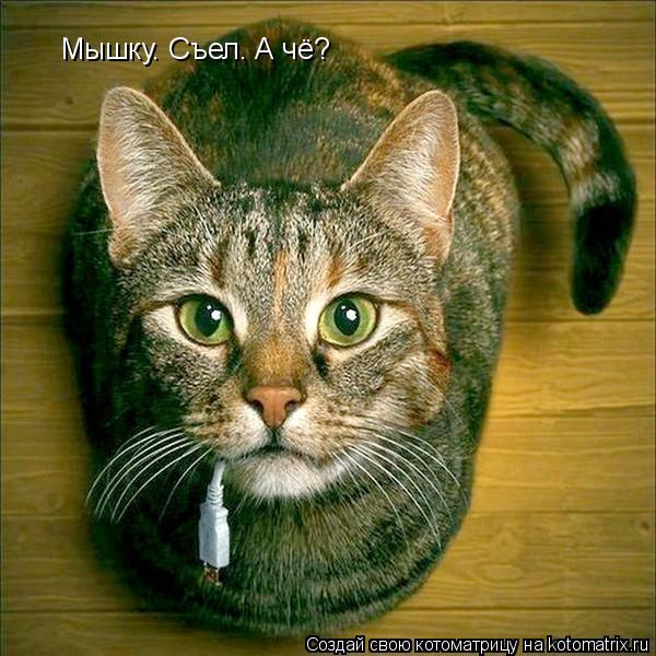 Котоматрица: Мышку. Съел. А чё?