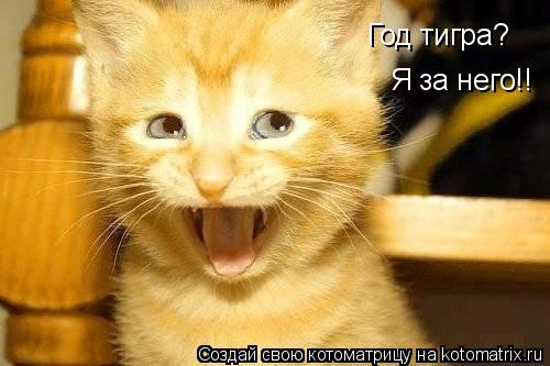 Котоматрица: Год тигра?  Я за него!!