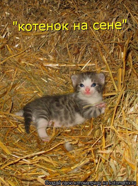 """Котоматрица: """"котенок на сене"""""""