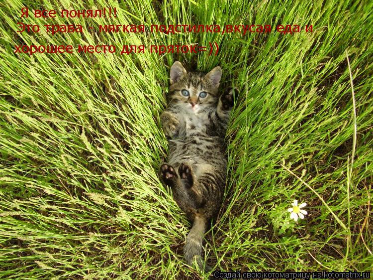 Котоматрица: Я все понял!!!  Это трава - мягкая подстилка,вкусая еда и  хорошее место для пряток=))