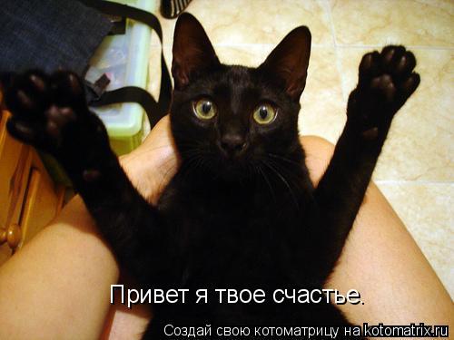 Котоматрица: Привет я твое счастье.