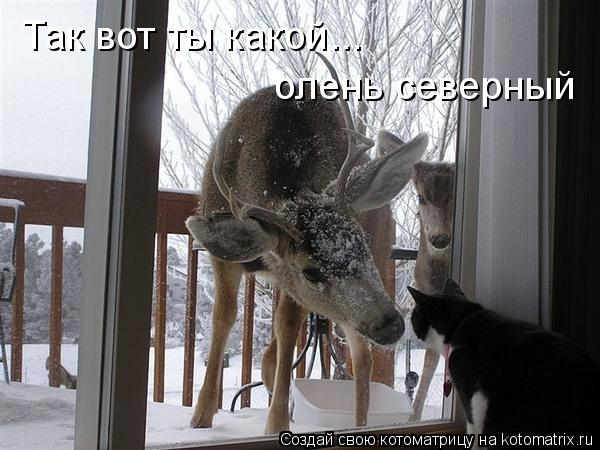 Котоматрица: Так вот ты какой... олень северный
