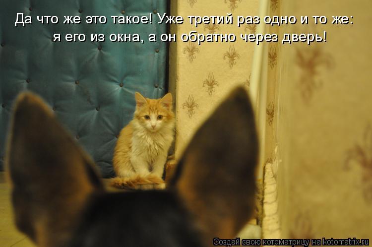 Котоматрица: Да что же это такое! Уже третий раз одно и то же:  я его из окна, а он обратно через дверь!