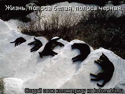 Котоматрица: Жизнь, полоса белая, полоса черная.