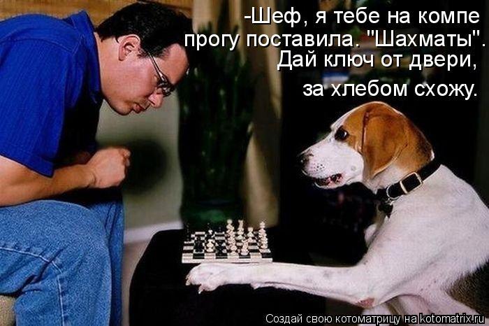 "Котоматрица: -Шеф, я тебе на компе  прогу поставила. ""Шахматы"". Дай ключ от двери,  за хлебом схожу."