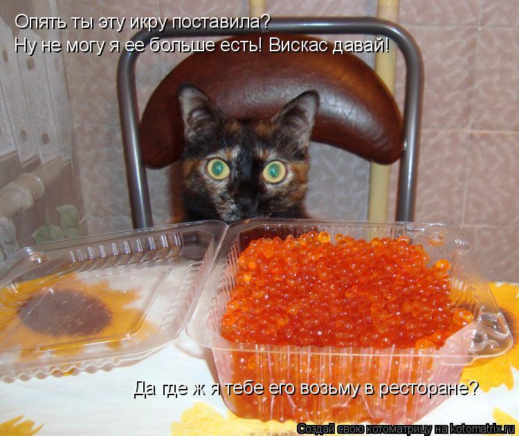 Котоматрица: Опять ты эту икру поставила? Ну не могу я ее больше есть! Вискас давай! Да где ж я тебе его возьму в ресторане?