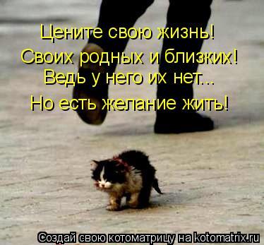 Котоматрица: Цените свою жизнь!  Своих родных и близких! Ведь у него их нет...  Но есть желание жить!