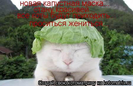 Котоматрица: новая капустная маска... стану красивей... все коты будут приходить... проситься жениться...