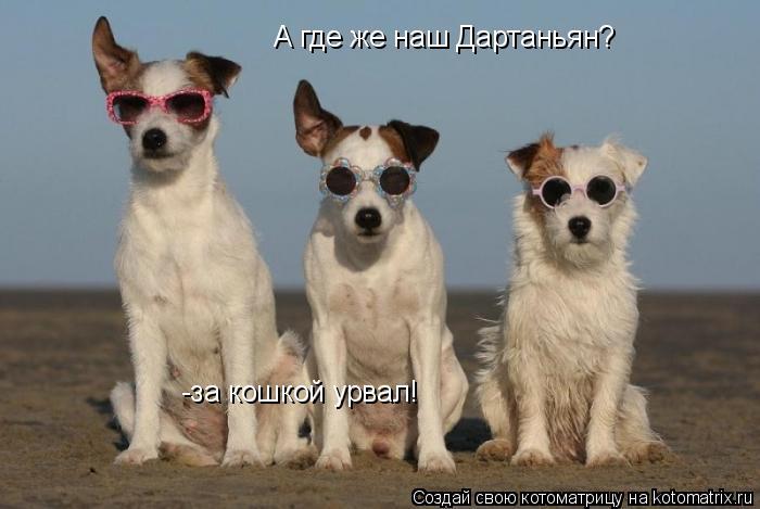 Котоматрица: А где же наш Дартаньян? -за кошкой урвал!