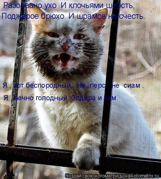 Котоматрица: Разорвано ухо  И клочьями шерсть, Поджарое брюхо  И шрамов не счесть. Я – кот беспородный,  Не «перс», не «сиам». Я – вечно голодный  Задира и