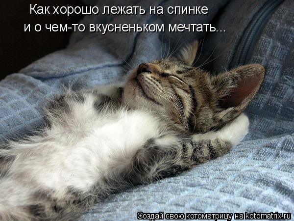 Котоматрица: Как хорошо лежать на спинке и о чем-то вкусненьком мечтать...