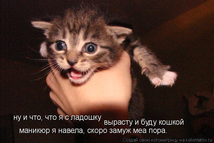 Котоматрица: ну и что, что я с ладошку вырасту и буду кошкой маникюр я навела, скоро замуж меа пора.