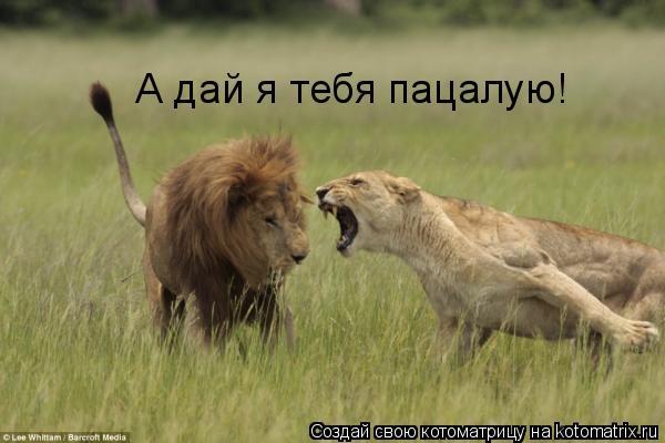 Котоматрица: А дай я тебя пацалую!