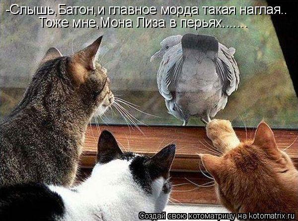 Котоматрица: -Слышь,Батон,и главное морда такая наглая..  Тоже мне,Мона Лиза в перьях.......