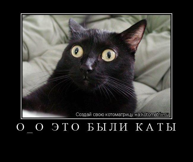 Котоматрица: О_о это были каты