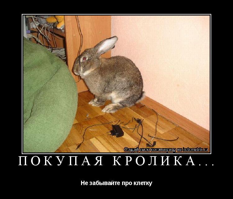 Котоматрица: Покупая кролика... Не забывайте про клетку
