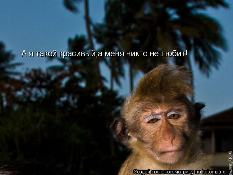 Котоматрица: А я такой красивый,а меня никто не любит!