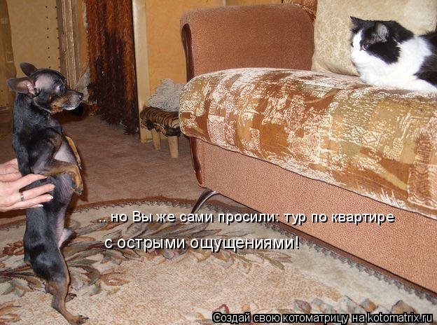 Котоматрица: .. но Вы же сами просили: тур по квартире с острыми ощущениями!