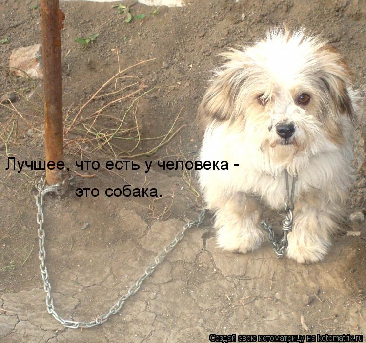 Котоматрица: Лучшее, что есть у человека -  это собака.