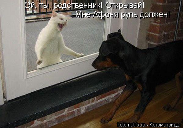 Котоматрица: Эй, ты, родственник! Открывай! Мне Афоня рупь должен!