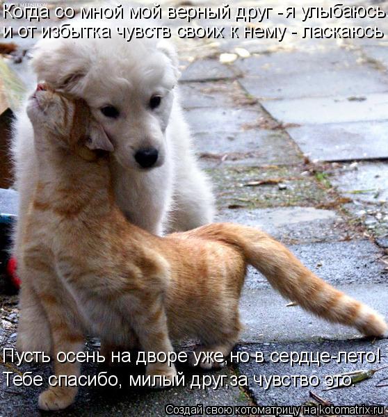 Котоматрица: я улыбаюсь. Когда со мной мой верный друг -  и от избытка чувств своих к нему - ласкаюсь Пусть осень на дворе уже,но в сердце-лето! Тебе спасибо
