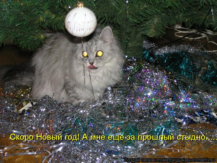 Котоматрица: Скоро Новый год! А мне еще за прошлый стыдно.....