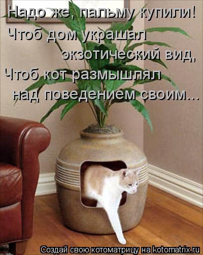 Котоматрица: Надо же, пальму купили! Чтоб дом украшал экзотический вид, Чтоб кот размышлял  над поведением своим...