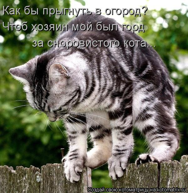 Котоматрица: Как бы прыгнуть в огород? Чтоб хозяин мой был горд за сноровистого кота...