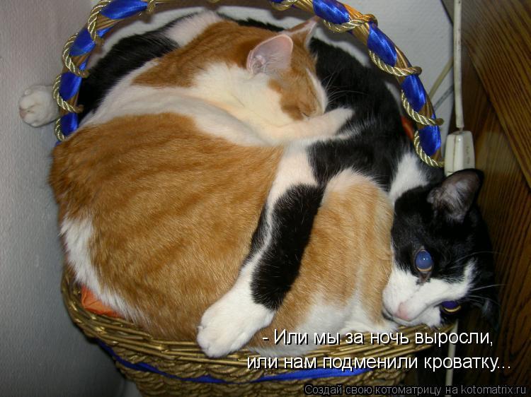 Котоматрица: - Или мы за ночь выросли,  или нам подменили кроватку...
