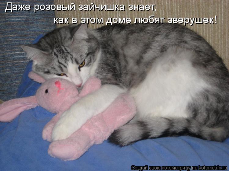 Котоматрица: Даже розовый зайчишка знает, как в этом доме любят зверушек!