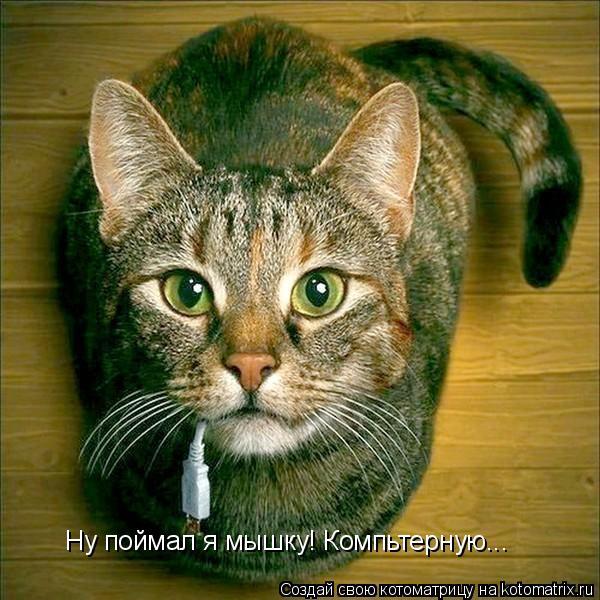 Котоматрица: Ну поймал я мышку! Компьтерную...