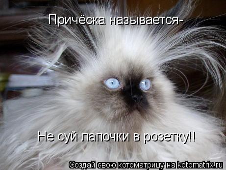 Котоматрица: Причёска называется- Не суй лапочки в розетку!!