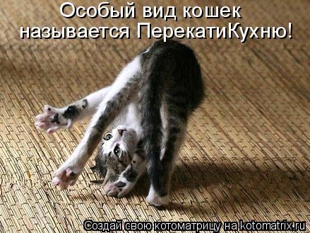 Котоматрица: Особый вид кошек  называется ПерекатиКухню!