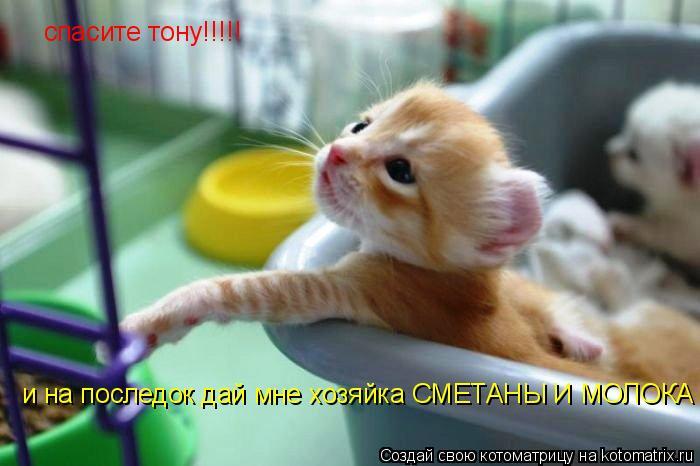 Котоматрица: спасите тону!!!!! и на последок дай мне хозяйка СМЕТАНЫ И МОЛОКА