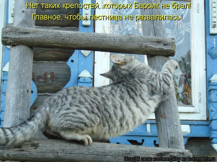Котоматрица: Нет таких крепостей, которых Барсик не брал! Главное, чтобы лестница не развалилась!