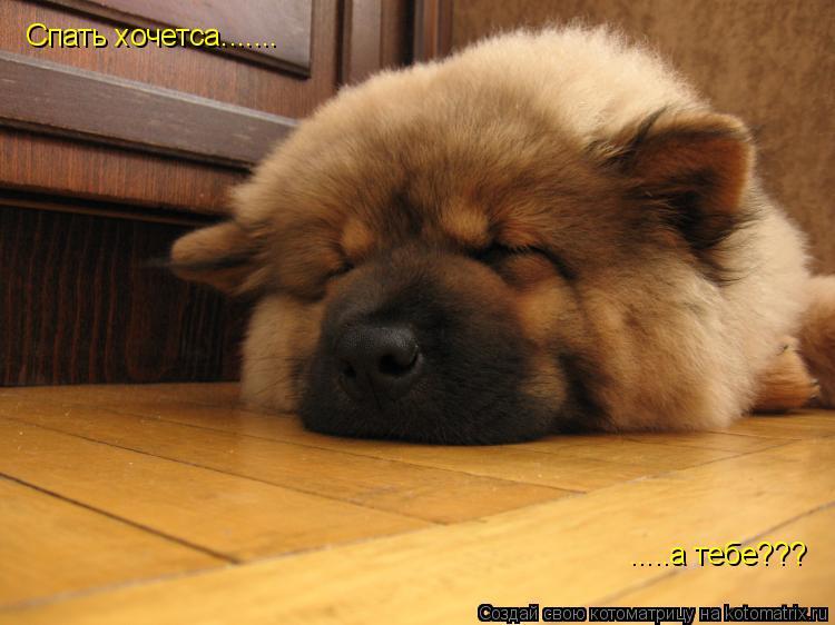 Котоматрица: Спать хочетса....... .....а тебе???