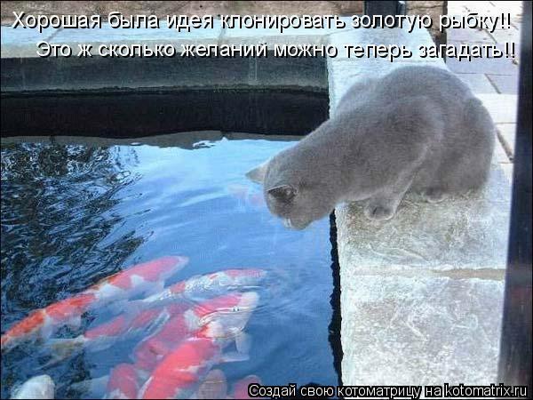 Котоматрица: Это ж сколько желаний можно теперь загадать!! Хорошая была идея клонировать золотую рыбку!!