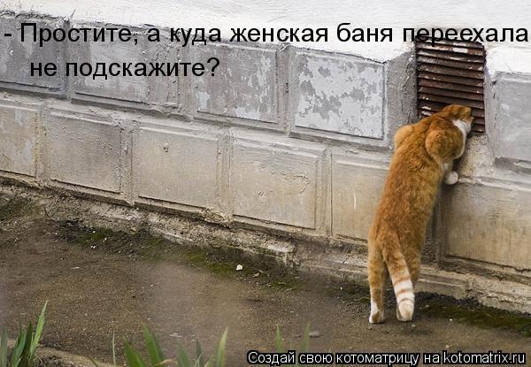 Котоматрица: - Простите, а куда женская баня переехала,  не подскажите?