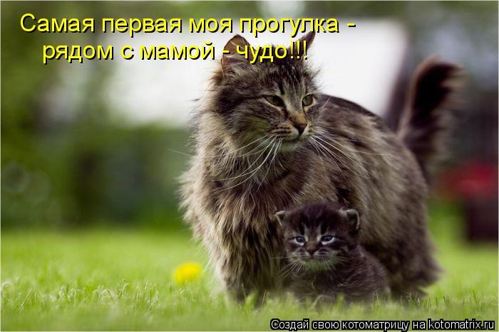 Котоматрица: Самая первая моя прогулка - рядом с мамой - чудо!!!