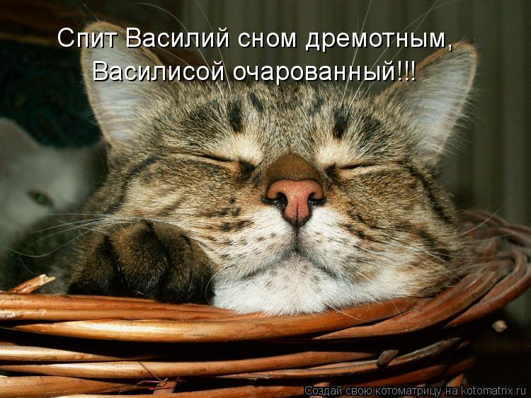 Котоматрица: Спит Василий сном дремотным, Василисой очарованный!!!