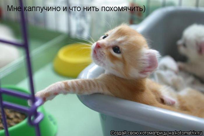 Котоматрица: Мне каппучино и что нить похомячить)