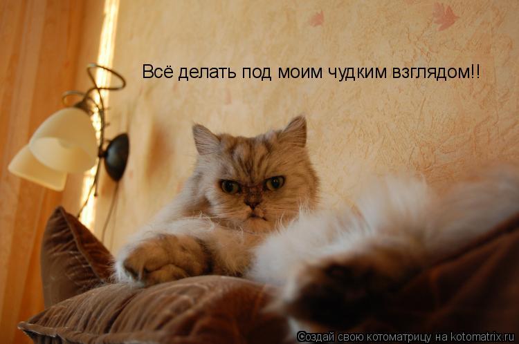 Котоматрица: Всё делать под моим чудким взглядом!!
