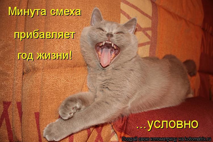 Котоматрица: Минута смеха год жизни! прибавляет ...условно
