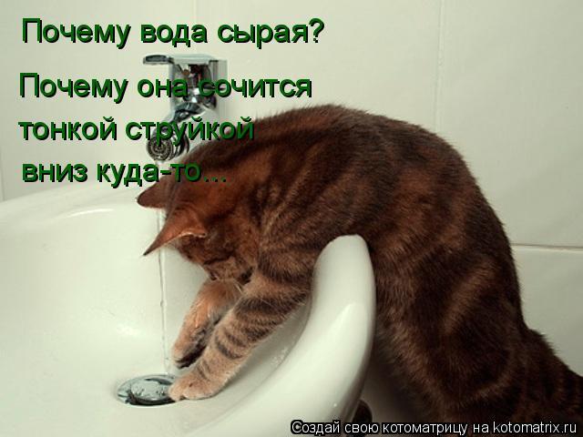 Котоматрица: Почему вода сырая? Почему она сочится  тонкой струйкой вниз куда-то...