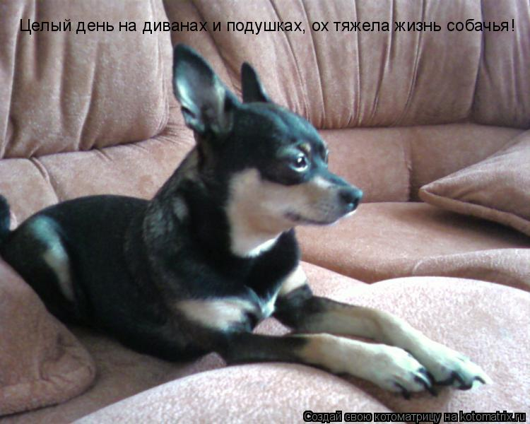 Котоматрица: Целый день на диванах и подушках, ох тяжела жизнь собачья!