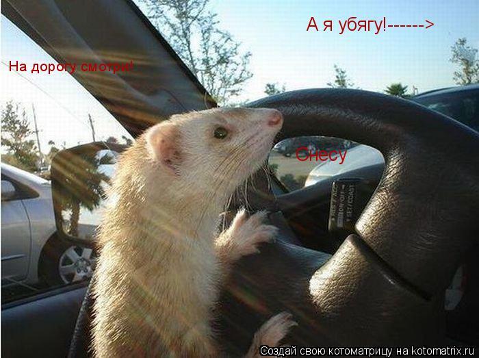 Котоматрица: Снесу А я убягу!------> На дорогу смотри!