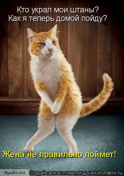 Котоматрица: Кто украл мои штаны? Как я теперь домой пойду? Жена не правильно поймет!